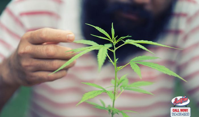 So, You Want to Grow Your Own Marijuana at Home