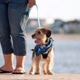 dog leash laws in california