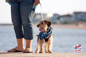 dog leash laws in california